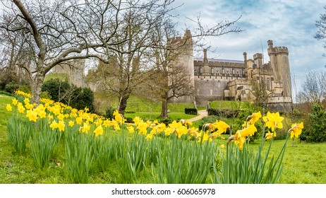 A medieval castle in England, with yellow daffodils in the foreground