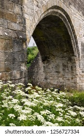 Medieval stone arch of the Old Stirling Bridge over the River Forth with Wallace Monument and white Queen Annes Lace flowers Stirling Scotland UK