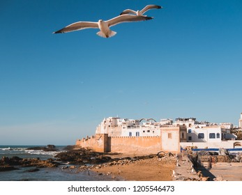 Medina of Essaouira, Morocco, with old city wall and seagulls in foreground