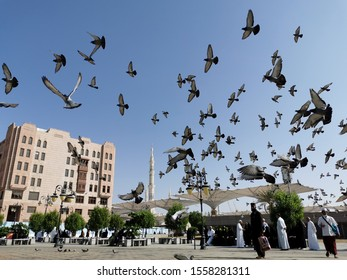 Medina, Saudi Arabia, 11/11/2019 - A group of pigeons were flying around the mosque