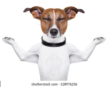 Meditating dog with arms  raised up and closed eyes