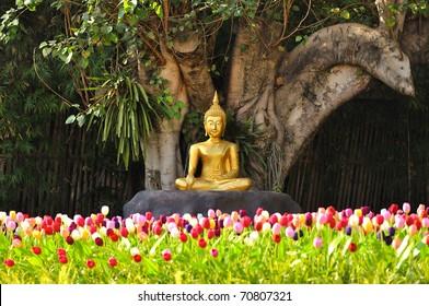 Meditation Buddha statue in tulips garden Under the Bodhi tree.  Location Chiang Mai, Thailand.