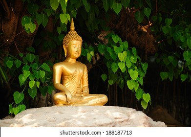 Meditation Buddha statue. Under the banyan tree