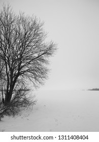 Meditative black and white landscape with winter view on lonely tree near snowy field, mobile photo