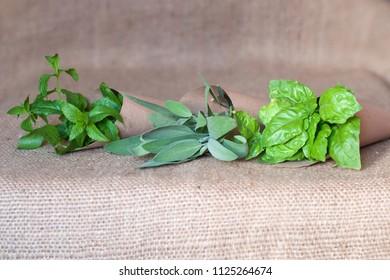 Mediterranean aromatic herbs