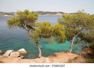 mediterranean beach with trees and sea