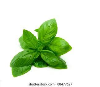 Mediterranean diet: fresh basil on white background