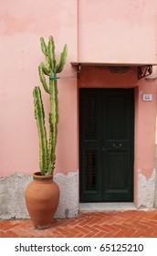 Mediterranean doorway featuring cactus