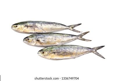 """Mediterranean fish Capone - Lampuga """"Coryphaenna hippurus"""""""