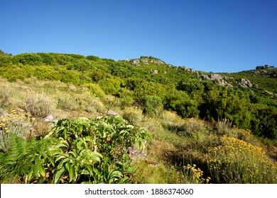 Mediterranean flora in Corsica mountain                                 - Shutterstock ID 1886374060