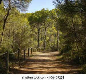 Mediterranean forest in Menorca