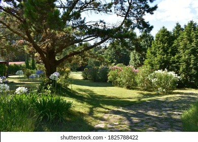 Mediterranean garden on Brijuni in full blossom. Oleander bushes are framing the stone slab pathway.