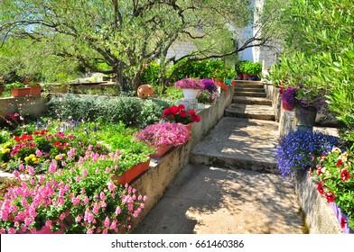 Mediterranean garden plants flowers summer Croatia