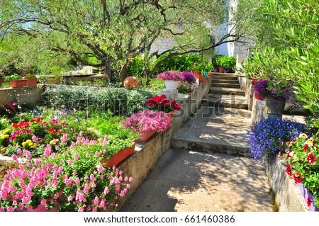 Mediterranean Garden Plants Flowers Summer Croatia Stock Photo (Edit ...