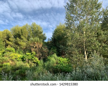 Mediterranean landscape in Can Matas public park in Sant Cugat del Valles Barcelona Spain