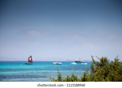 Mediterranean landscape with some boats in the background and a green plant in the foreground