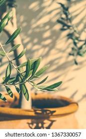 Mediterranean nature, botanical background and summertime concept - Olive garden in Greece