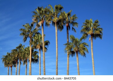 Mediterranean palm trees by the beach in the French Riviera.