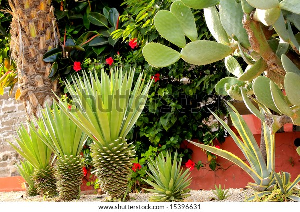 Mediterranean Plants Stock Photo Edit Now 15396631