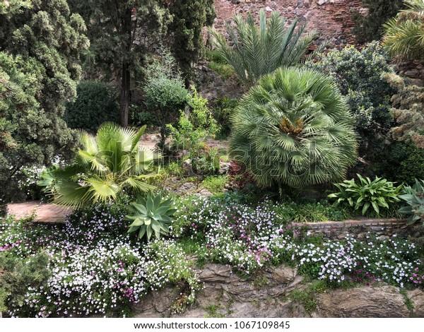 Mediterranean Plants Garden Planting Ideas Stock Photo Edit Now
