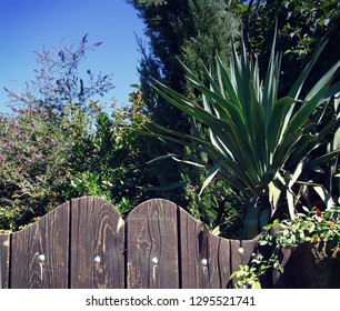 Mediterranean rural landscape: the wooden fence of a garden,  lush vegetation, warm weather and blue sky