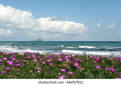 mediterranean sea landscape with blooming beach and cloudy sky