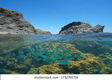 Mediterranean sea rocky coast with an islet and a group of fish underwater, Spain, Costa Brava, Colera, Catalonia, split view over and under water surface