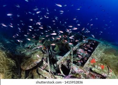 Mediterranean Sea, Sardinia, U.W. photo, wreck diving, sunken world war II submarine and a school of Anthias - FILM SCAN