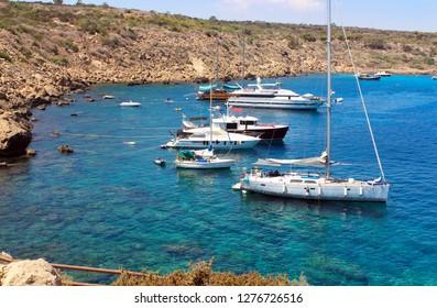 Mediterranean Sea shore. Cypres in summer