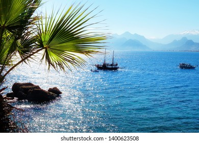 Mediterranean seascape with palm tree and clear blue sea water in Antalya, Turkey