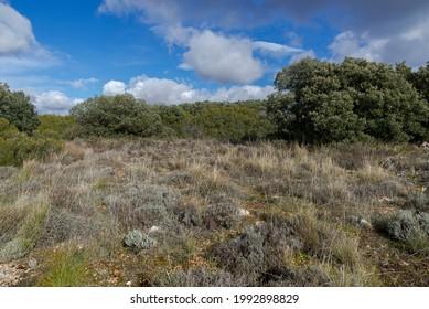 mediterrane Heiligtümer und Wälder in der Gemeinde Olmeda de las Fuentes, Provinz Madrid, Spanien