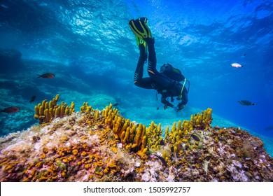 Mediterranean sponges. Adriatic sea near Hvar island, Croatia.