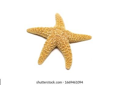 mediterranean starfish on a white background