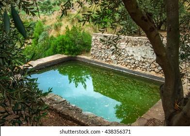 Mediterranean terracing, olive plantation, and the ancient rainwater harvesting system, Sorrento peninsula, Italy