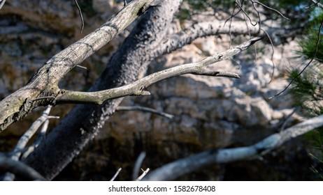 mediterranean tree branch in summer