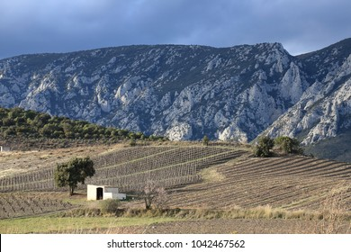 mediterranean vineyard and isolated cabin in Fenouilledes. Pyrenees orientales in south of France