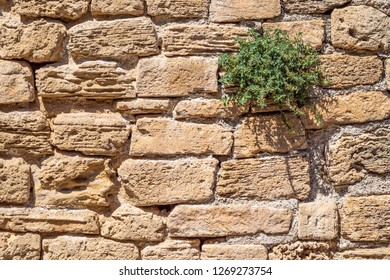 mediterranean wall with plant