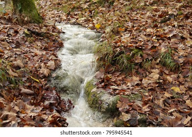 Medium closeup on clear water of brook in fall. Surrounded by autumn leaves in forest.