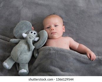 Medium horizontal frontal view of cute round-faced fair infant baby boy lying bare-chested in grey blanket with plush toy elephant staring curiously