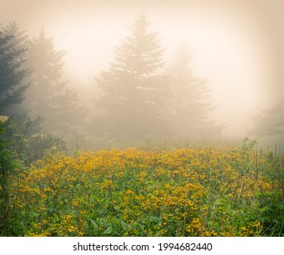 medium rectangle banner size, Misty forest with yellow wild flowers in Virginia on Whitetop Mountain.