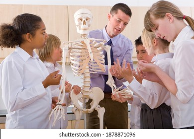 A Medium wide shot of school children observantly listening to biology teacher as he practically explains the structure of a human skeleton with the help of the model.