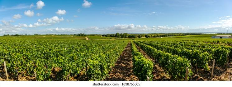 Medoc Vineyard, Medoc wine region, Nouvelle-Aquitaine, France