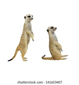 Meerkats isolated on white background, selective focus.