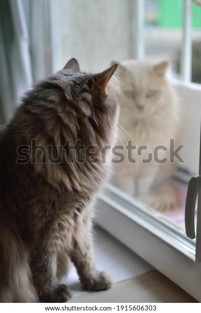 meeting-domestic-street-cats-gray-600w-1