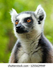 Meeting a lemur up close and personal in Madagascar