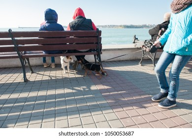 meeting of two domestic dogs with owners in city on seashore in springtime