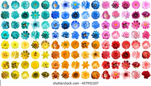 Mega pack of 120 in 1 natural and surreal blue, orange, red, yellow, turquoise and pink flowers isolated on white