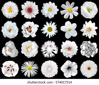 Mega pack of natural and surreal white flowers 20 in 1 isolated on black