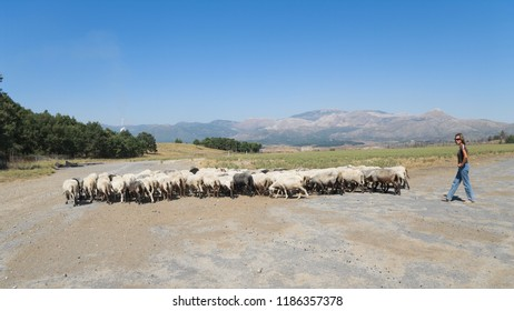 MEGALOPOLI, GREECE - JULY 15, 2009:  young woman shepherd dressed with jeans, t-shirt and sunglasses leading a flock of sheep