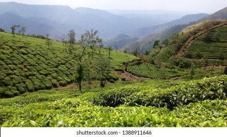 Megamalai,  cardamom plantations and tea estates